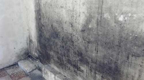 Плесень бетона что крепче цементный раствор или плиточный клей